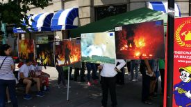 1 Public campaign-Protect Macedonian forest from forest fires