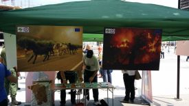 5 Public campaign-Protect Macedonian forest from forest fires